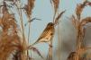 birdbehindreed-cp