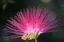 card-pink-flower-cp